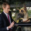 Because you demanded it… the MARMADUKE trailer is here