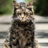 Stephen King's PET SEMATARY review by Patrick Hendrickson – sometimes dead is better
