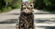 Enter to win Stephen King's PET SEMATARY on 4K Blu-ray – now available in stores!