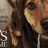 A DOG'S WAY HOME review by Mark Walters – a welcome return of the sweet family film