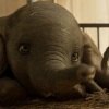 DUMBO review by Mark Walters – Tim Burton brings humanity to a classic animal story