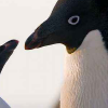 Austin, Dallas & Houston – see Disneynature's PENGUINS free Wednesday, April 10th at 7pm